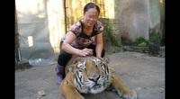 """Từ loạt bài """"Xâm nhập đường dây buôn bán hổ xuyên quốc gia"""": Tổng kiểm tra tất cả cơ sở nuôi nhốt hổ"""
