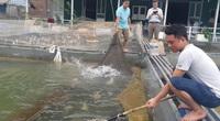 """Trai Mường nuôi cá đặc sản ở hồ Thung Nai, nhiều con trắm đen dài cả mét lượn lờ như """"tàu ngầm"""""""