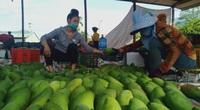 """Sơn La: Có """"cây giảm nghèo"""" bền vững, chảo lửa Yên Châu xuất hiện nhiều triệu phú"""