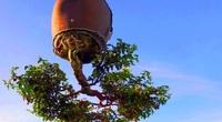"""Ấn tượng vườn bonsai ngược trên sân thượng nhà phố của """"dị nhân"""" Quảng Nam"""