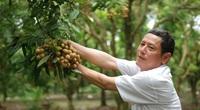 Trung Quốc dừng mua long nhãn của 3 doanh nghiệp, Tham tán thương mại Trung Quốc khuyên gì?