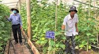 Gia Lai: Sản xuất theo chuỗi giá trị nông sản, nông dân tăng nhanh thu nhập