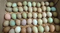 Loại trứng xanh đỏ khác thường, đắt gấp 15 lần trứng gà được bà nội trợ lùng mua là trứng gì?