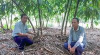 Hậu Giang: Ông Lời trồng giống tre gì mà măng mọc quanh năm, lãi 250 triệu đồng?
