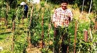 Khánh Hòa: Xáo tam phân là cây quý thế nào mà ở đây cả nhà nước và nhân dân cùng bảo tồn?