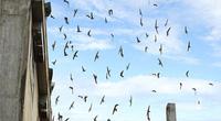 Bình Thuận: Chim tiền tỷ thấy bay trên trời thì dễ nhưng khó quản ở dưới đất