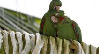 Đôi vẹt quấn quýt bên nhau lọt top ảnh đẹp động vật tuần qua