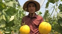 Bỏ việc lương nghìn đô về trồng dưa công nghệ Israel