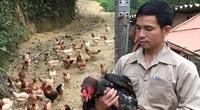 """Hoà Bình: Trai đất Mường nuôi gà Mía đỏ cả vườn, có bao nhiêu thương lái cũng """"khuân"""" sạch"""