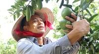Bình Dương: Một tỷ phú nông dân lãi 8 tỷ/năm nhờ chăn nuôi công nghệ cao, trồng trái cây đặc sản và nuôi chim yến