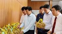 """Bắc Ninh: """"Tỏi An Thịnh"""" được trao bằng sở hữu trí tuệ về chỉ dẫn địa lý"""