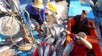 Bão số 5: Còn 11 tàu cá ngư dân Bình Định nằm trên đường đi của bão