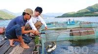 """Bình Định: Nuôi thành công thứ cá chép """"lạ"""" ăn giòn sần sật, bán đắt gấp 3 lần cá chép thường"""