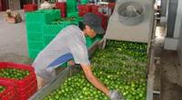 Long An: Làm nông nghiệp 4.0 đầu ra vẫn gập ghềnh
