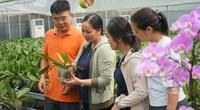 Vườn lan hồ điệp thu nhập hơn 3 tỷ đồng/năm của trai 8X Hà thành, trồng 80.000 chậu, 40 màu hoa