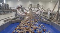 Cận cảnh: Nhà máy chế biến hoa quả tươi hiện đại nhất Tây Bắc chuẩn bị hoạt động