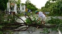 TT-Huế: Chuyên viên phòng giáo dục tử vong vì cây gãy do bão đè trúng