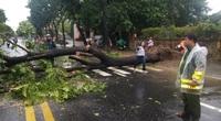 ẢNH: Nhà dân tốc mái và cây xanh, trụ điện gãy đổ hàng loạt ở Thừa Thiên - Huế