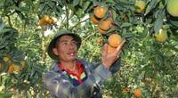 Khánh thành nhà máy chế biến rau quả tươi Vân Hồ: Ước mơ nhiều đời của nông dân Sơn La đang trở thành hiện thực