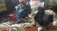 Giá gia cầm hôm nay 19/9: Giá vịt thịt miền Nam quay đầu giảm, dân nuôi gà trắng lỗ nặng