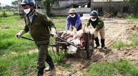 """Giá heo hơi hôm nay: Miền Bắc tăng miền Nam chững, dịch tả lợn châu Phi lại """"nổ"""" ở Nghệ An"""