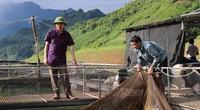 Thả đàn cá đặc sản xuống lòng hồ sông Đà, nhiều hộ thiếu ăn thiếu mặc nay có trăm triệu/năm