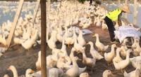 Giá gia cầm hôm nay 22/9: Nguồn cung gà vịt tăng cao, chuyên gia cảnh báo khẩn điều này