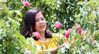 Người phụ nữ chán ngắm loài hoa tình yêu, đem đi ướp khô thành trà cực sạch thơm và cái kết đầy bất ngờ