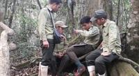 Bảo vệ và phát triển rừng ở Quảng Nam: Tăng giám sát chi trả dịch vụ môi trường rừng