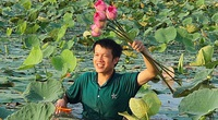 """Nghệ An: Cấy lúa mãi chẳng ăn thua, trai 9X """"máu liều"""" trồng sen Tây Hồ trái mùa, giờ ngồi đếm hoa thu tiền"""