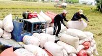 Nửa đầu tháng 9, 6 doanh nghiệp đăng ký xuất khẩu 4.300 tấn gạo thơm sang EU