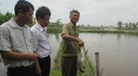 Thái Bình: Nuôi cá đặc sản, trồng chuối tây lai nông dân nhanh khấm khá