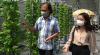 """Tăng năng suất, chất lượng rau nhờ """"cỗ máy"""" trồng rau lơ lửng trên không"""