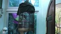 Chuyện con chim khướu của tôi