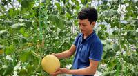 """""""Làn sóng"""" làm nông nghiệp công nghệ cao ở Quảng Ninh"""