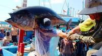 Bình Định: Đang cấp tốc đưa 1 ngư dân câu cá ngừ đại dương bị tai nạn trên biển vào bờ cấp cứu