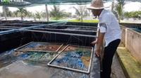 Chàng kỹ sư bỏ việc lương cao về nuôi 15 loài tôm, cá, thu tiền tỷ mỗi năm