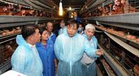 """Nông nghiệp miền Trung - Tây Nguyên cần """"cú hích"""" để tạo đột phá (bài 2): Đánh thức tiềm năng chăn nuôi"""