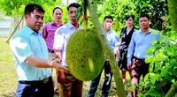 Xây dựng NTM Hà Giang: Phấn đấu đến 2025 không còn xã dưới 13 tiêu chí