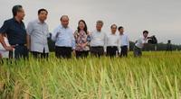 An Giang: Lấy nông nghiệp và du lịch làm nền tảng, động lực phát triển kinh tế