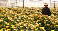 """Nông nghiệp miền Trung - Tây Nguyên cần """"cú hích"""" để tạo đột phá (bài 3): Hướng đến trung tâm nông nghiệp công nghệ cao"""