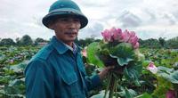 Thanh Hóa: Ông Chủ tịch Hội nông dân trồng loài cây gì ở ruộng bỏ hoang mà tách hạt bán hàng tấn sang Nhật?