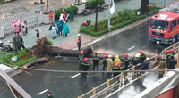 Xót xa hoàn cảnh người bị cây dầu đè tử vong ở TP.HCM
