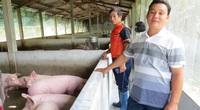 Phú Yên: Trai 30 tuổi đã là tỷ phú nuôi heo, đi làm bằng xe hơi