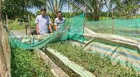 Hậu Giang: Nông dân rủ nhau làm chuồng nuôi lươn đồng, bán 210 ngàn/ký, nhà nào cũng khá giả