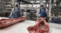 Bên trong nhà máy lạnh 4 độ C chế biến thịt mát, vốn đầu tư 1.800 tỷ sắp khánh thành