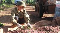 Chiều nay 28/9, Thủ tướng đối thoại với nông dân: Người dân Tây Nguyên mong chờ quyết sách đột phá cho toàn vùng