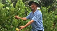 Vũng Tàu: Vì đam mê ông nông dân trồng cây lạ mà lãi lớn, hàng xóm kéo sang ầm ầm xin học theo