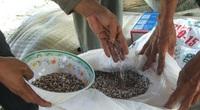 Thủ tướng Nguyễn Xuân Phúc: Bỏ tù đại lý, cá nhân sản xuất phân bón giả