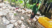 Giá gia cầm hôm nay 30/9: Giá gà thịt lông trắng bất ngờ giảm trên dưới 2.000 đồng/kg